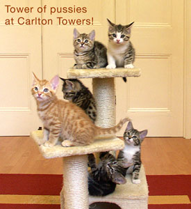 Tower of kittens